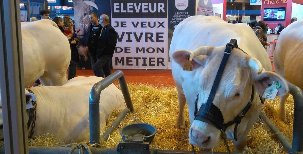 les-revendication-des-eleveurs-bovins-s-affichent-au-salon-international-de-l-agriculture