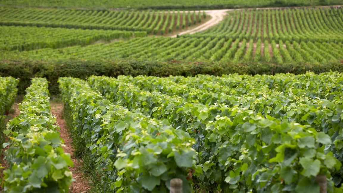 vin_france_production