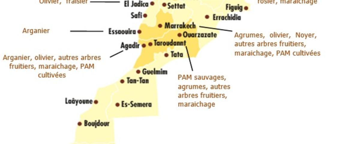 Maroc, où en est la production biologique